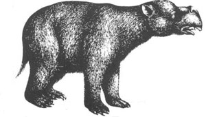 Diprotodon drawing
