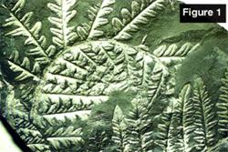 Fern figure 1