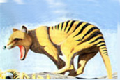 Extinct marsupial thylacine