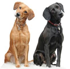 Dog cousins