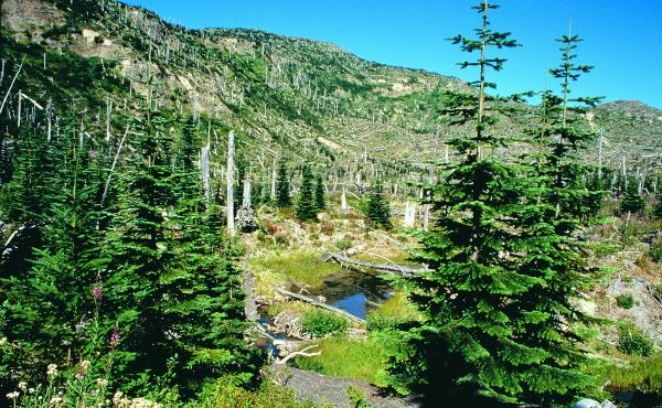 287-mt-st-helens-forest
