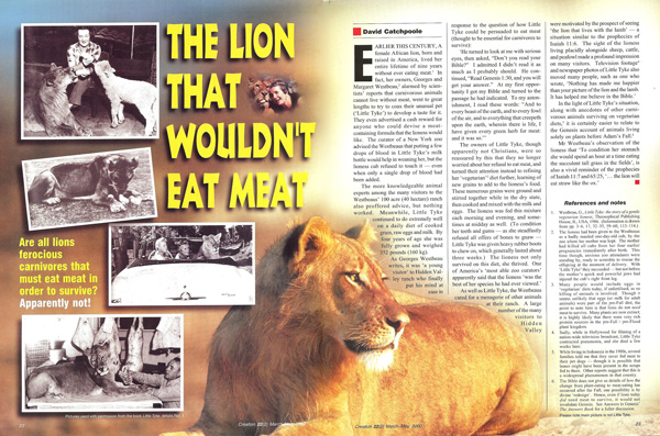 Lion wont eat meat