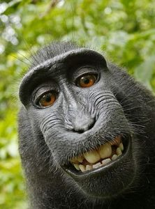 171-macaque-self-portrait-1