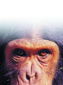 191-ape