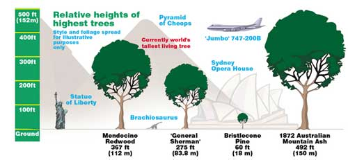 Heights of trees