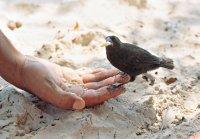 Tame bird