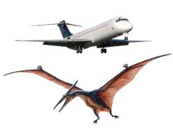 pterosaur and plane