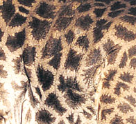 giraffe coat