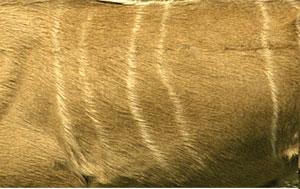 kudu coat
