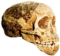 the Taung child skull