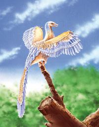 5543archaeopteryx
