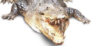 Fearsome reptile