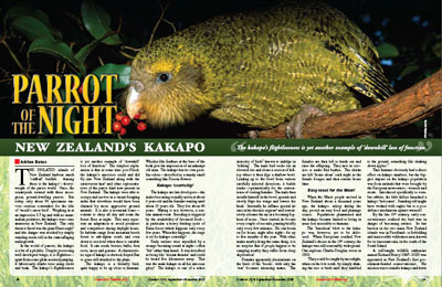 Kakapo night parrot