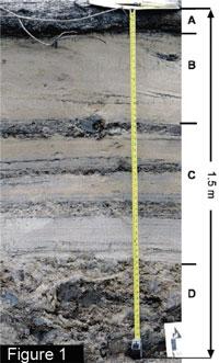 Sedimentary deposit