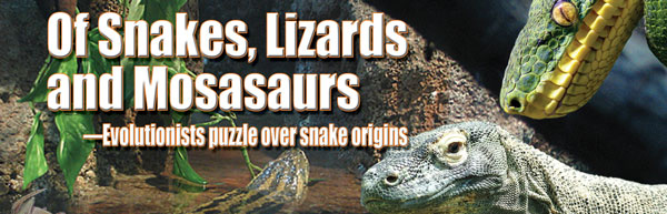 Snakes, lizards and mosasaurs