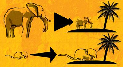 Elephant and shrew