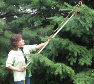 Gina with one of her favourite conifer species, Douglas-fir.  She grew these trees from tiny seedlings.