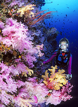 diver admiring colorful coral reef