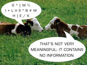 Cows communicating