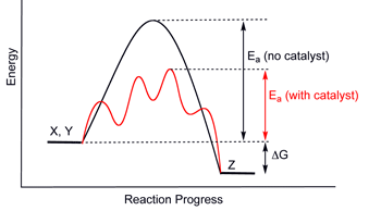 Generic potential energy diagram showing the effect of a catalyst in a hypothetical exothermic chemical reaction X + Y to give Z. The presence of the catalyst opens a different reaction pathway (shown in red) with a lower activation energy. The final result and the overall thermodynamics are the same.