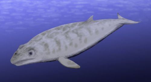 Janjucetus doesn't represent a step in the evolution of baleen whales.