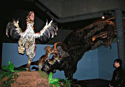 Feathered models of deinonychus, with a therizinosaurus in the background