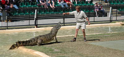 Crocodile being fed at Australia Zoo