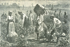 Slaves in America often picked cotton