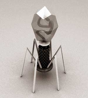 T4 bacteriophage virus diagram