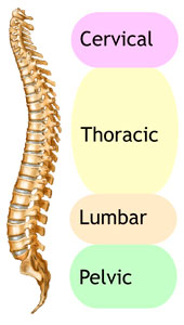 Human female spine