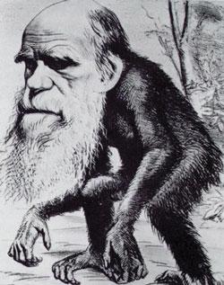 Darwin as an ape