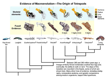 Cladogram of fish