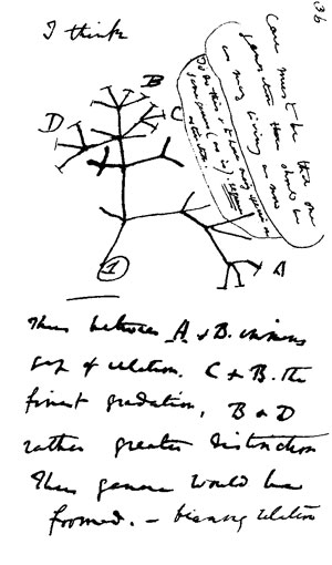 Darwin's first sketch of evolution looks like a bush.