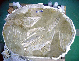 Fossilized skeleton
