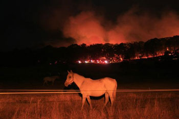 Bush fire animal