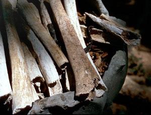 Killing field bones