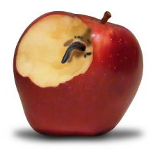 A worm in an apple