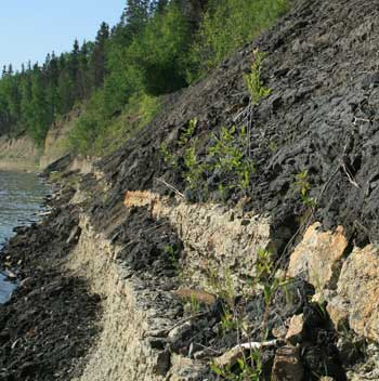 The contact between the oil sands and the subjacent Devonian limestone of Waterways Formation. The tar (bitumen) slowly and constantly oozes out the banks, sometimes rolling down the slope in little tar balls. Note the 'Sub-Cretaceous Unconformity' which assumes the Devonian layers are dipping at a different angle from the sands. In fact they are both horizontal. This is a paraconformity, where the strata above and below the gap are parallel and there is no evidence of erosion.