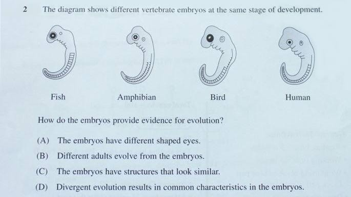 Figure 1: The exam question. Text reads: The diagram shows different vertebrate embryos at the same stage of development. How do the embryos provide evidence for evolution? (A) The embryos have different shaped eyes. (B) Different adults evolve from the embryos. (C) The embryos have structures that look similar. (D) Divergent evolution results in common characteristics in the embryos.