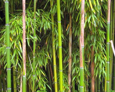 8991-bamboo