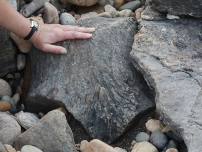 Two of the fossilized tree stumps at Crail, Scotland. The one on the left has no roots; the other shows complete absence of rotting. Both  indicate the affects of a powerful flood.