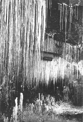 This photo, which can be seen on p. 26 in the booklet Stones and Bones, was instrumental in the conversion (to Christ) of a New Zealand man, who'd previously thought that stalagmites and stalactites needed millions of years to form. The above photo shows an array of stalagmites and stalactites inside a mining tunnel at Mt Isa, Queensland, Australia (note for scale, helmeted miners, bottom right). The tunnel was only about 50 years old when this photo was taken.