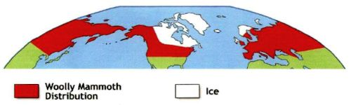 Figure 11. Woolly mammoth distribution (redrawn by Daniel Lewis with Eurasia from Khalke, 1999, figure 13).