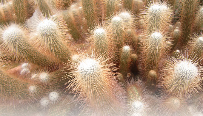 Cactus spines sharper than you think - creation com