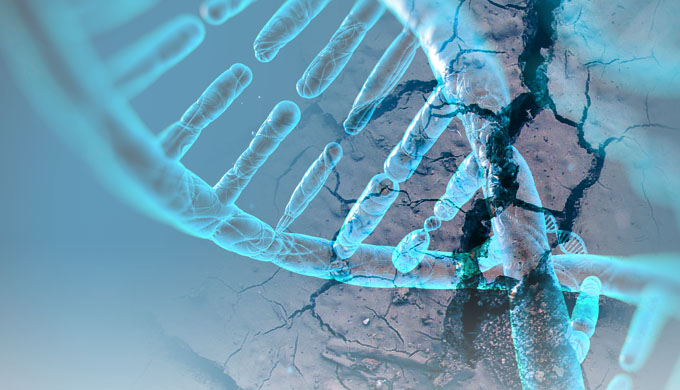 Human genome decay and the origin of life