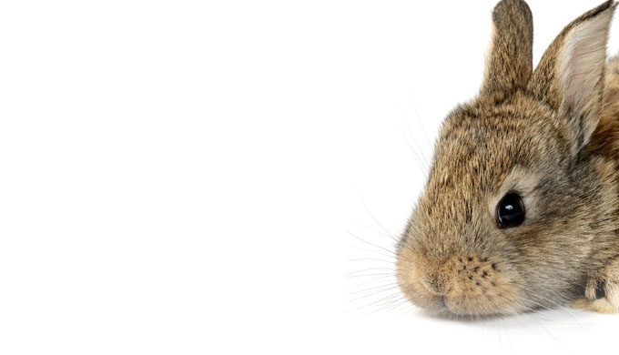 Precambrian rabbits—death knell for evolution?