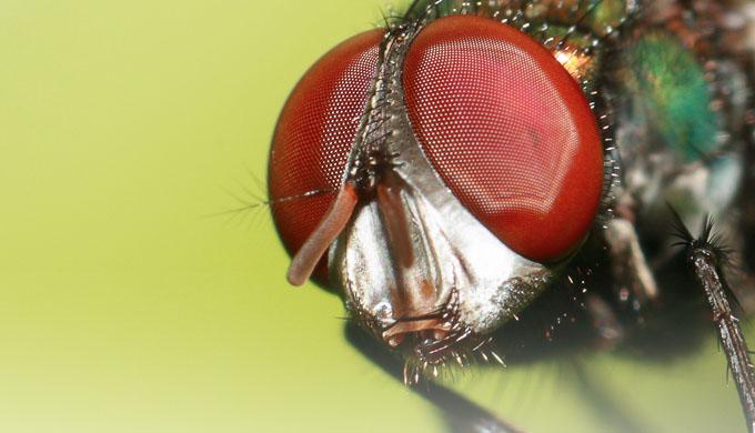"""""""Ochiul de insectă"""" care lărgeşte aria de vizibilitate"""