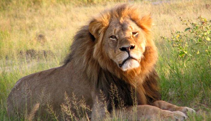 Cecil die leeu: moet ons omgee?