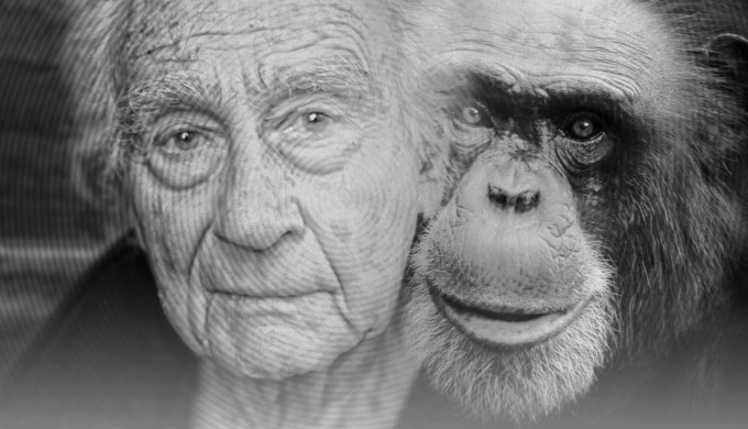 Why did God make humans and chimps so similar?