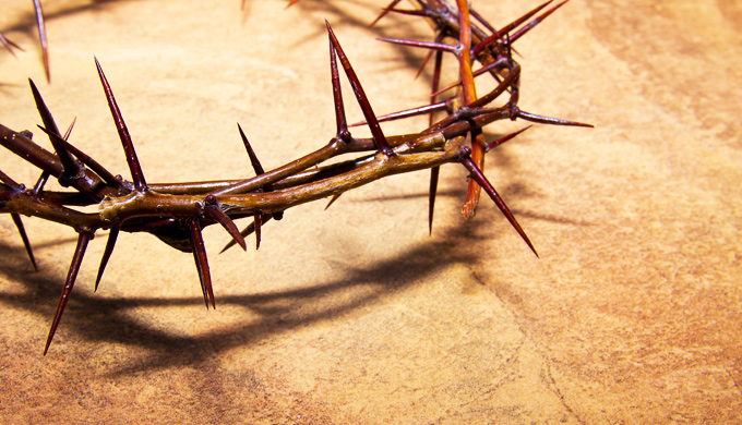 Why did Jesus wear a crown of thorns? - creation com